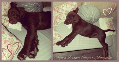 Agnes 4m