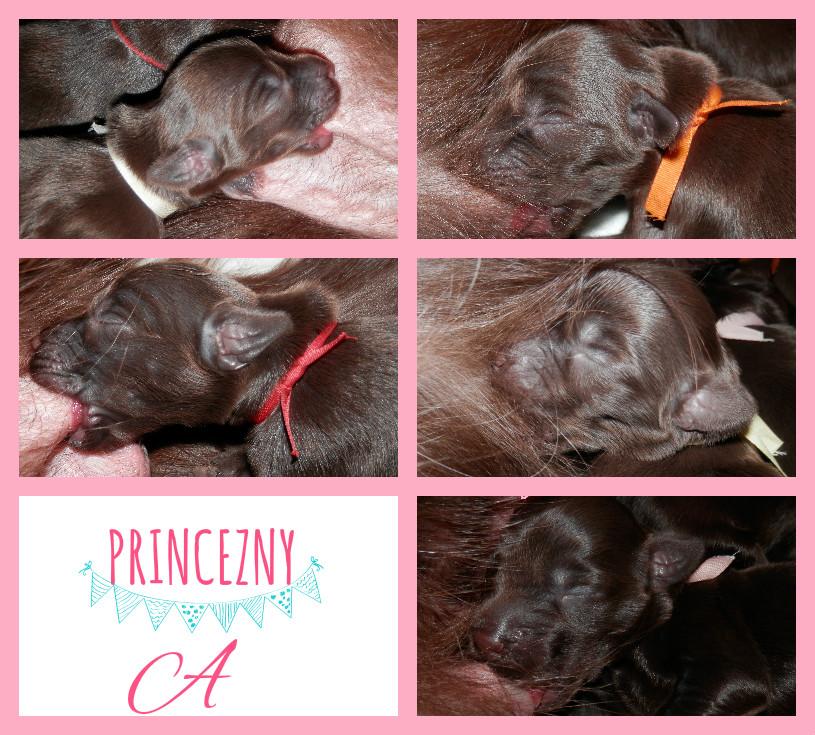 princezny