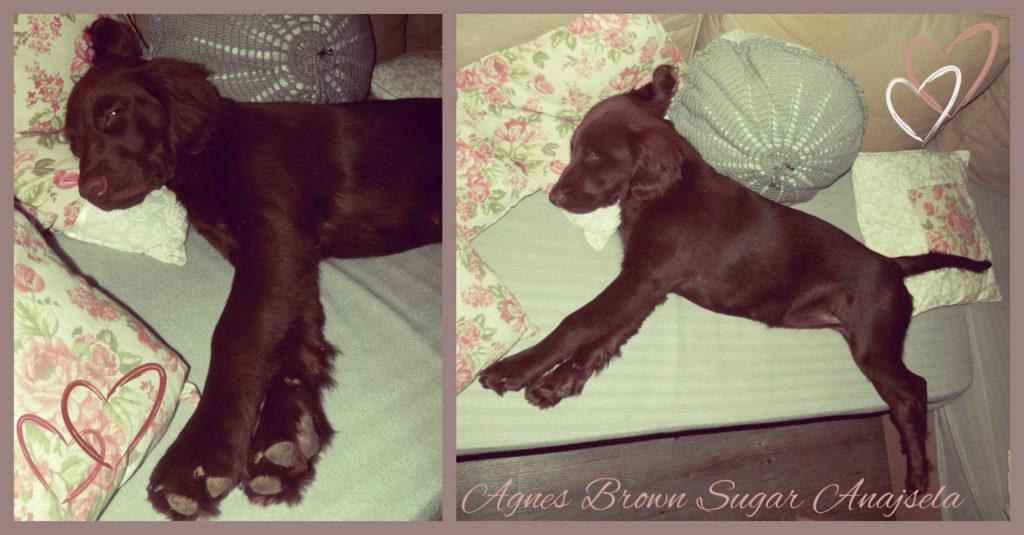 agnes-4-mesice